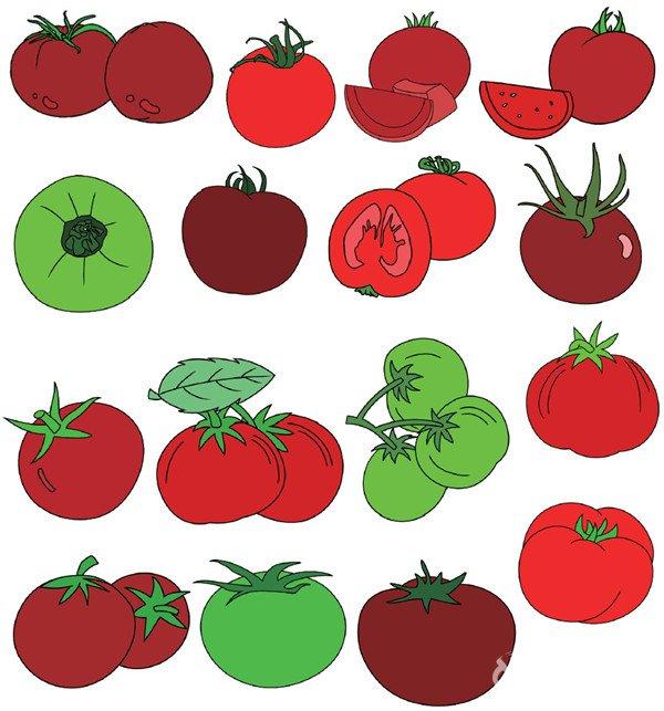 西红柿-蔬菜类简笔画 7