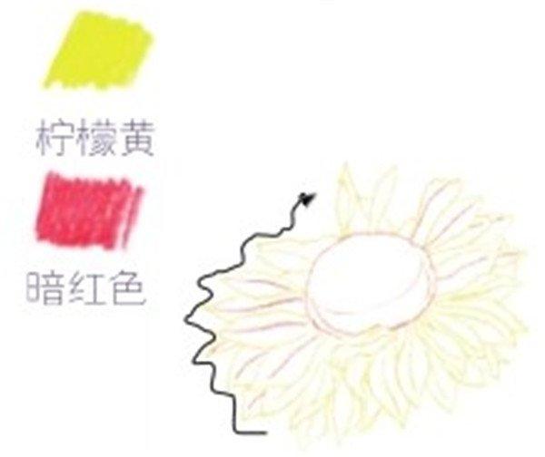 二,彩铅向日葵的绘画步骤    1,向日葵的线稿绘制    (1)用柠檬黄