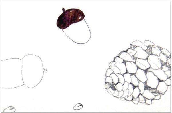 水彩纵透视法松果与橡子绘画步骤二