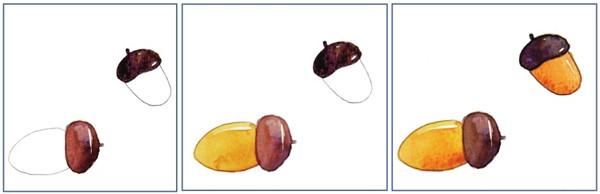 水彩纵透视法松果与橡子绘画步骤三