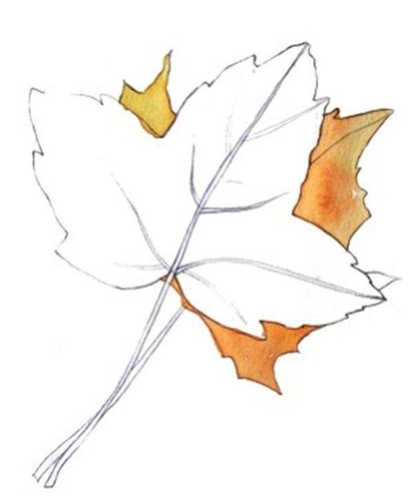 水彩枫叶绘画技法步骤二