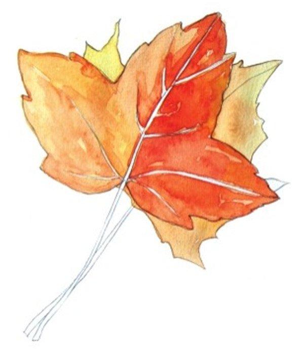 水彩枫叶绘画技法