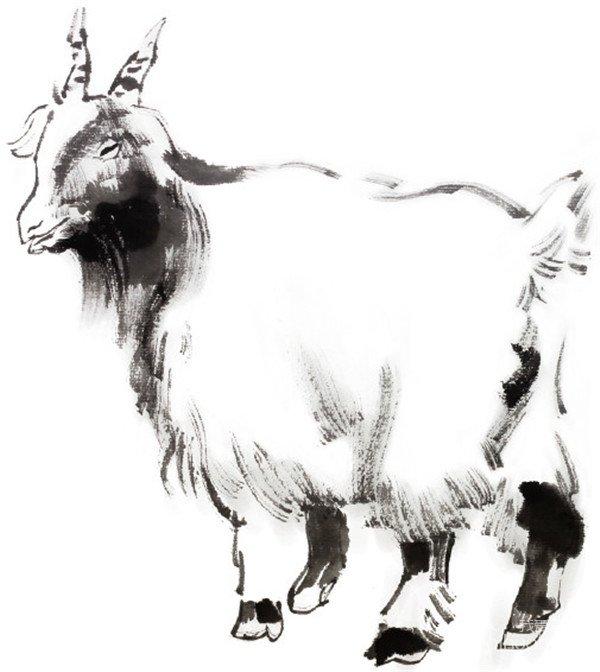 国画羊的绘画步骤(2)