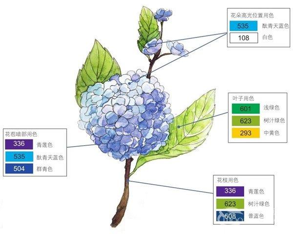 水彩紫阳花的绘画步骤