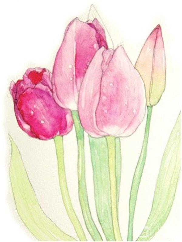 水彩郁金香的繪畫教程(4)圖片